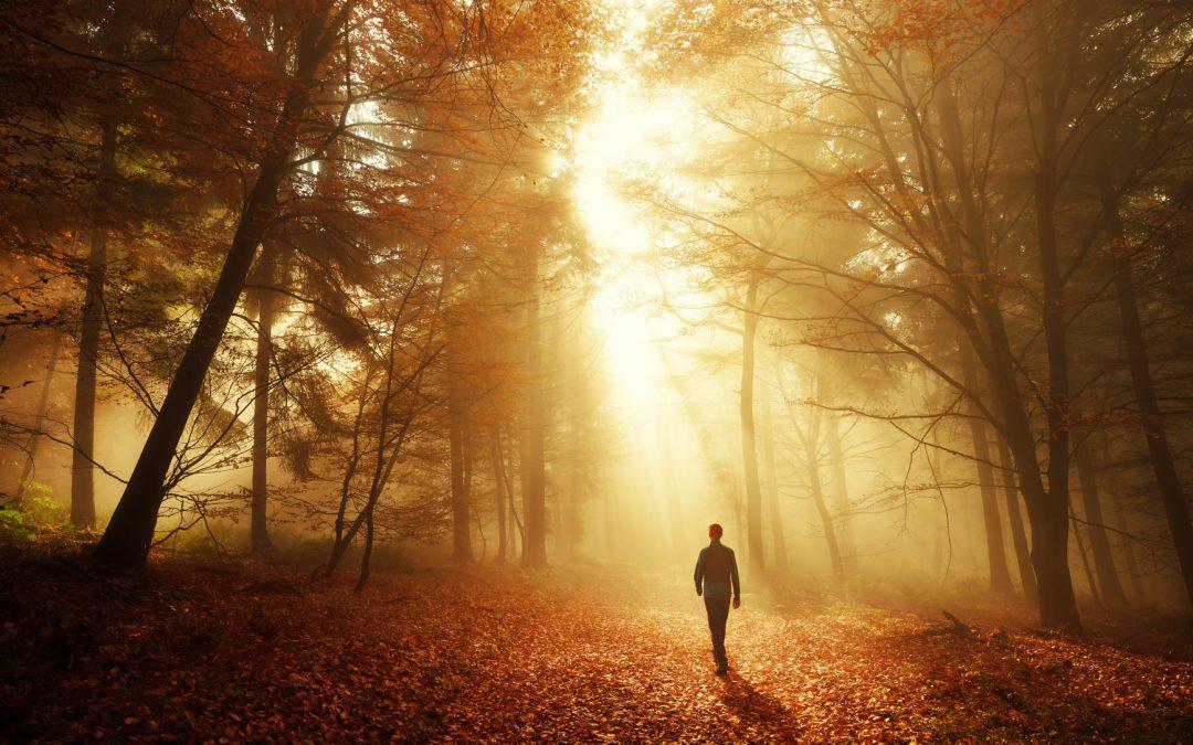 Mit der Kraft der Natur in ein neues Leben – Liebe, Ruhe, Achtsamkeit