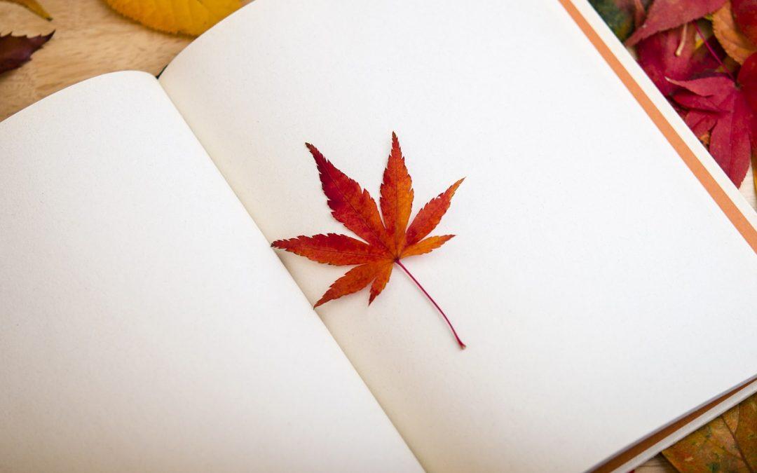 Struktur-Stefan 5: Führe ein Tagebuch