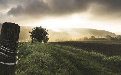 Corona und die Würde der Natur